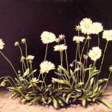 lou wandro, coreopsis, oil on wood panel